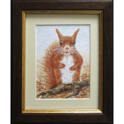 Liddell – Red Squirrel