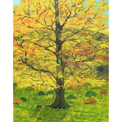 Dean – Oak in Autumn