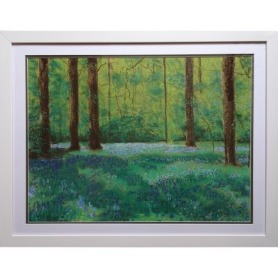 Jervis – Bluebell Wood