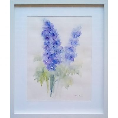Fearn – Blue Delphiniums
