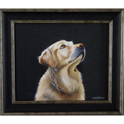 Ball – Golden Retriever