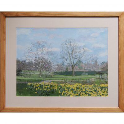 Newton – Daffodils in Early Spring