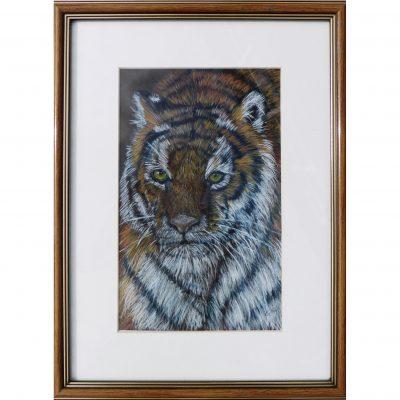Fox – Tiger
